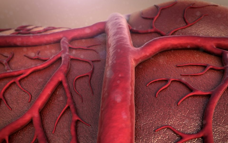 vein, human vein