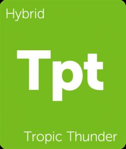 Leafly Tropic Thunder cannabis hybrid strain