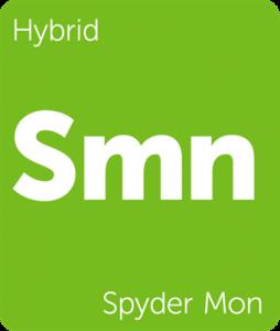 Leafly Spyder Mon cannabis hybrid strain tile