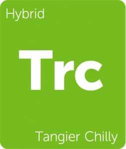 Leafly Tangier Chilly hybrid cannabis strain