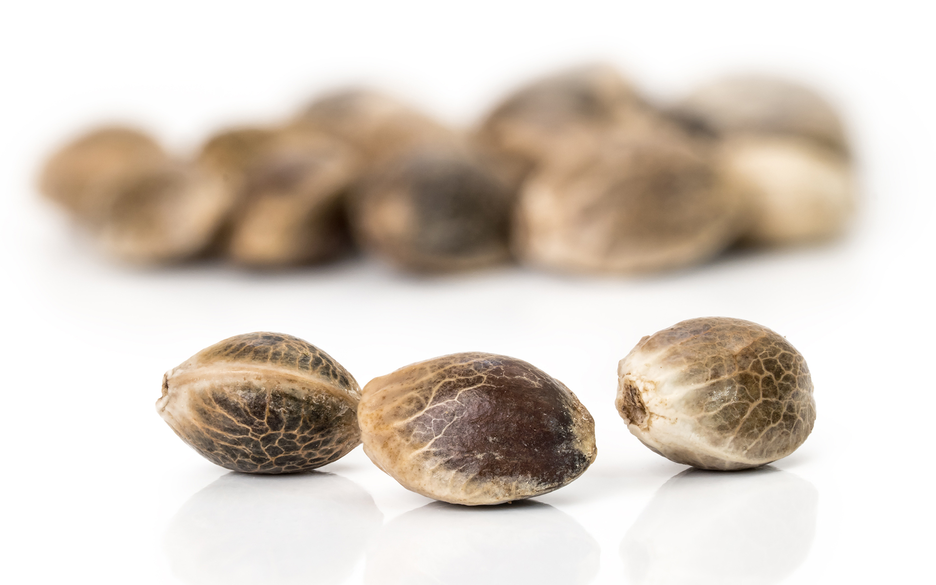 how to germinate cannabis seeds leafly