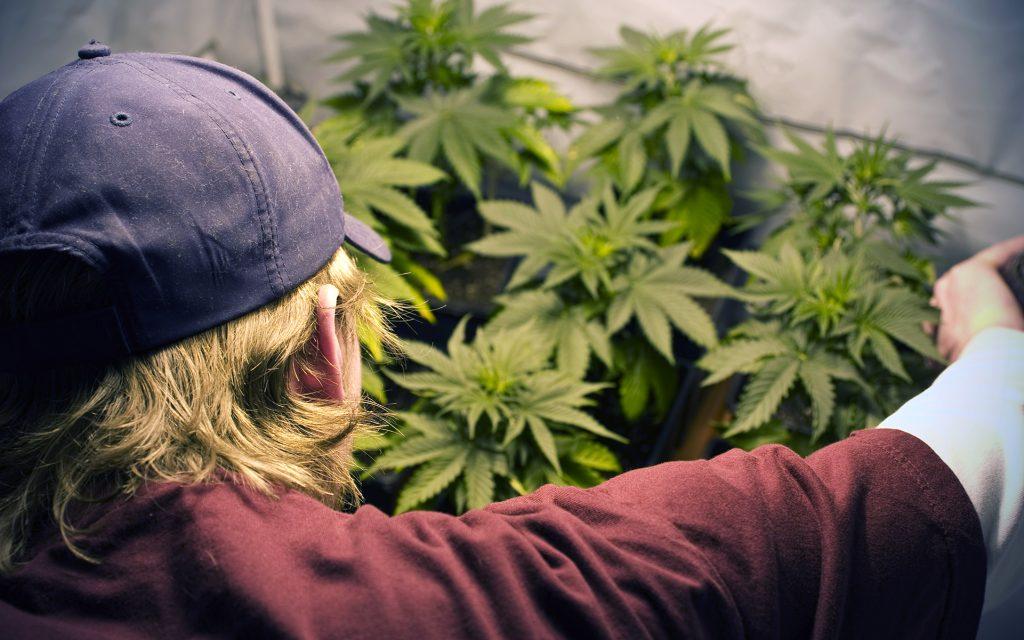 sustainable cannabis gardening tip: DIY garden
