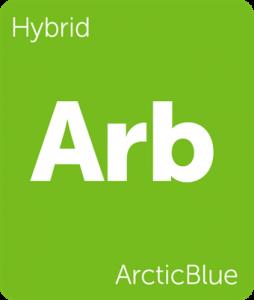 Leafly ArcticBlue hybrid cannabis strain