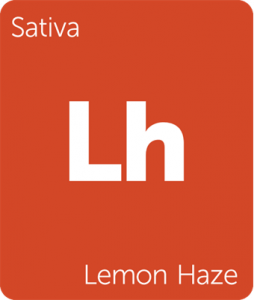 Leafly Lemon Haze sativa cannabis strain