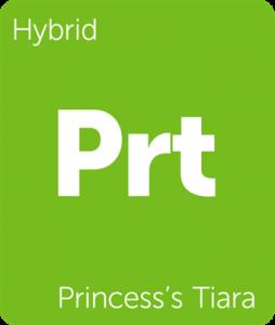 Leafly Princess's Tiara hyrbid cannabis strain tile