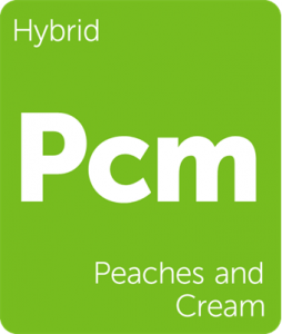 Leafly Peaches and Cream hybrid cannabis strain