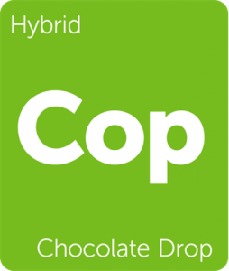 Leafly Chocolate Drop hybrid cannabis strain