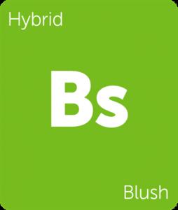 Leafly Blush hybrid cannabis strain tile