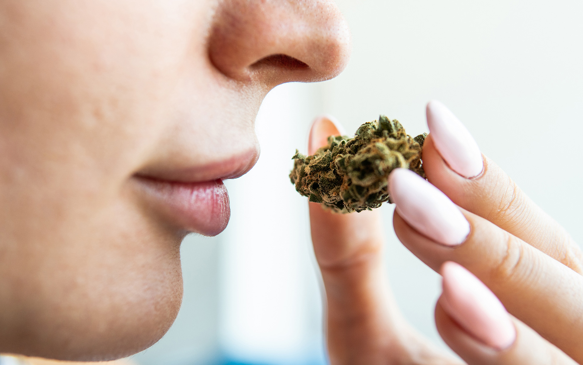 marijuana smell, cannabis odor