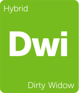 Dwi Dirty Widow