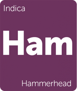 Ham Hammerhead