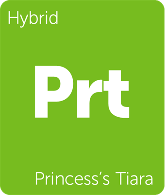 Leafly Princess's Tiara cannabis strain tile
