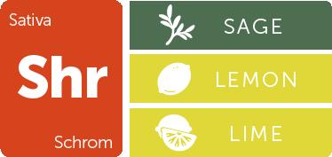Leafly Schrom cannabis strain flavor profile