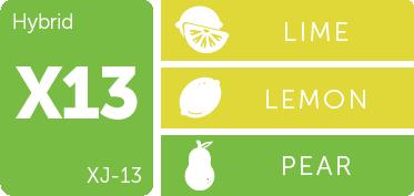 Leafly XJ-13 cannabis strain flavor profile