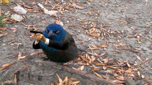 /birdswitharms submission