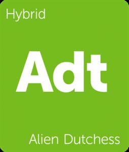 Adt Alien Dutchess
