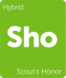 Sho Scout's Honor