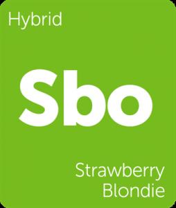 Sbo Strawberry Blondie