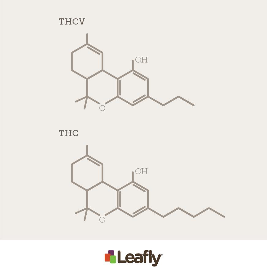 THCV-vs-THC 3