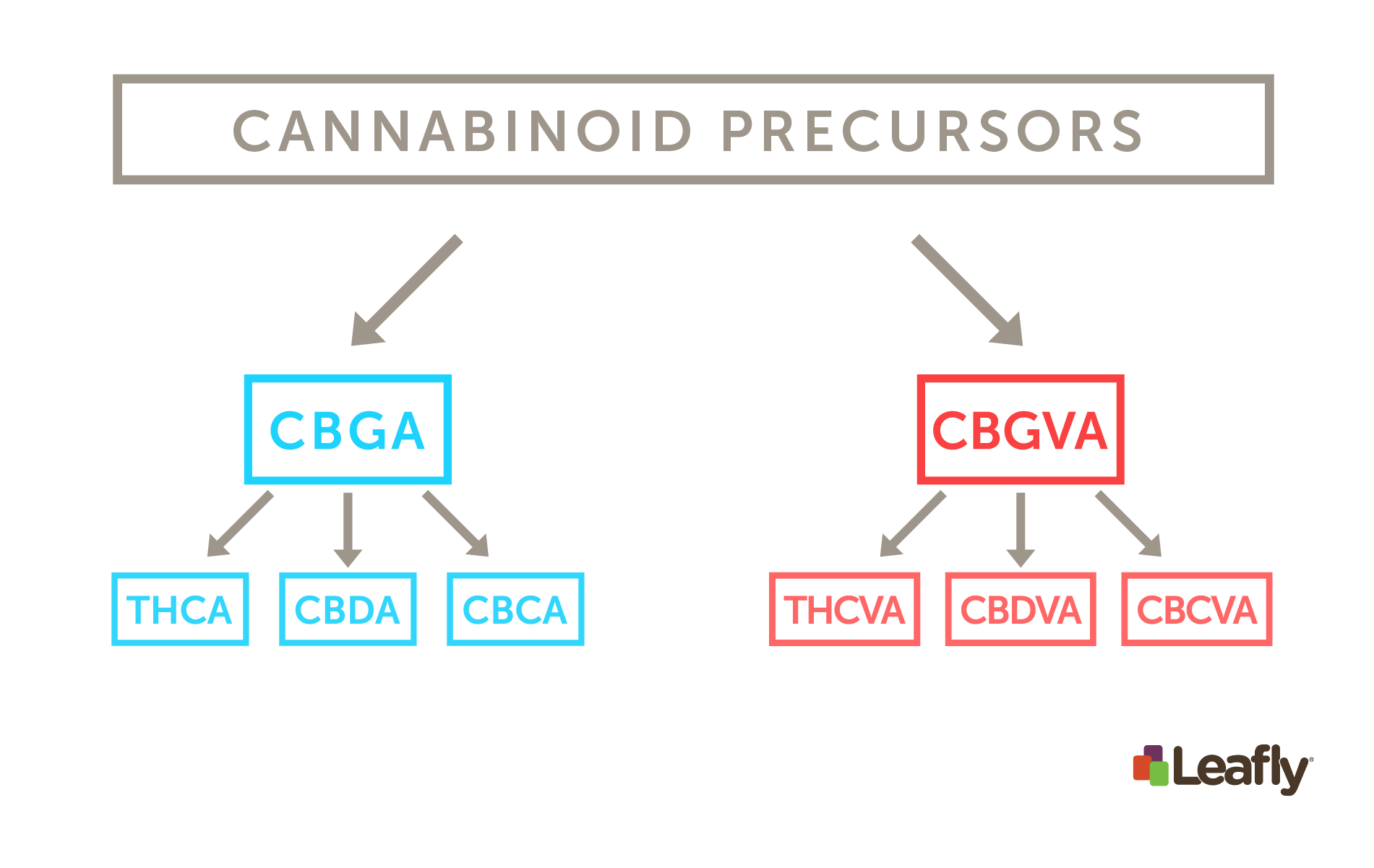 list of major cannabinoids in cannabis and their effects leafly
