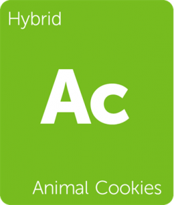 Leafly Animal Cookies hybrid cannabis strain