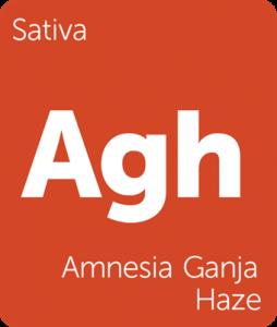 Leafly Amnesia Ganja Haze sativa cannabis strain
