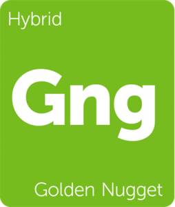 Golden Nugget Leafly cannabis strain tile
