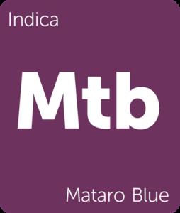 Mataro Blue Leafly cannabis strain tile