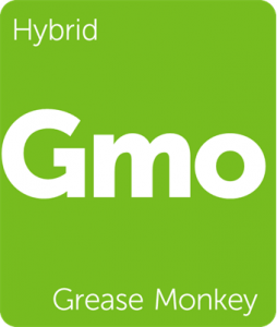 Gmo Grease Monkey Leafly cannabis strain tile
