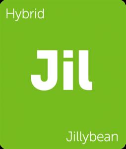 Leafly Jillybean hybrid cannabis strain