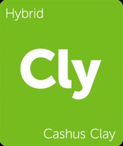 Cly Cashus Clay Leafly cannabis strain tile