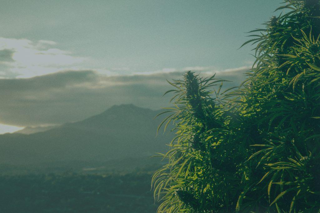 The Cannabis Health Summit 2017