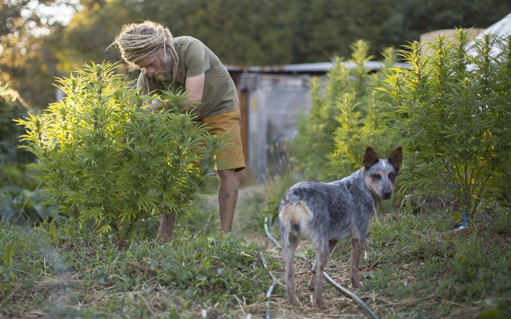 Meet the Cutest #DogsofCannabis on Instagram | Leafly