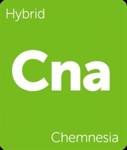 Leafly Chemnesia hybrid cannabis strain