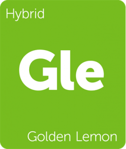 Leafly Golden Lemon hybrid cannabis strain