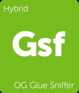 Leafly OG Glue Sniffer hybrid cannabis strain