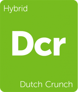 Leafly Dutch Crunch hybrid cannabis strain