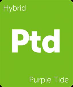 Leafly Purple Tide hybrid cannabis strain