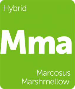 Leafly Marcosus Marhmellow hybrid cannabis strain