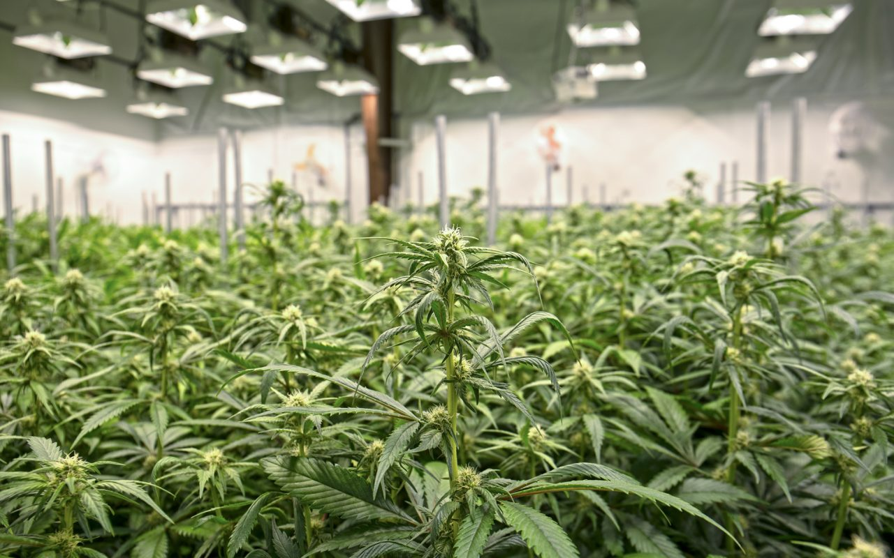 Maryland Grants First-Ever License to Grow Medical ...