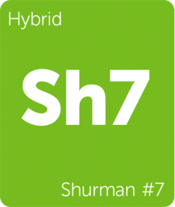 Sh7 Shurman #7 Leafly cannabis strain tile