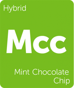 Mcc Mint Chocolate Chip