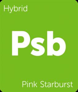 Psb Pink Starburst