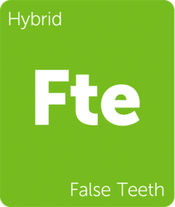 Fte False Teeth Leafly cannabis strain tile