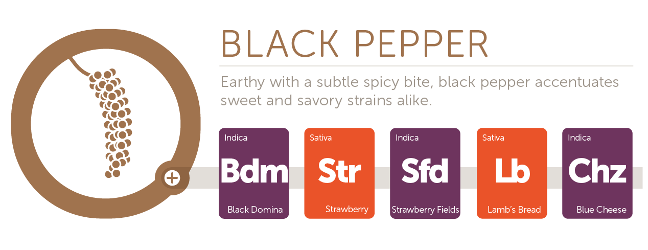 Black Pepper@2x