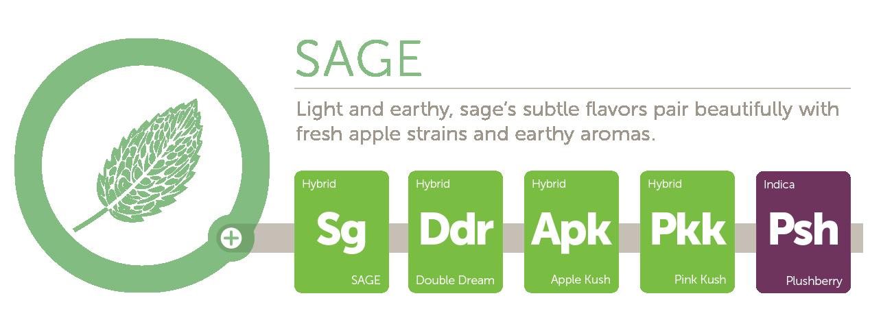 Sage@2x