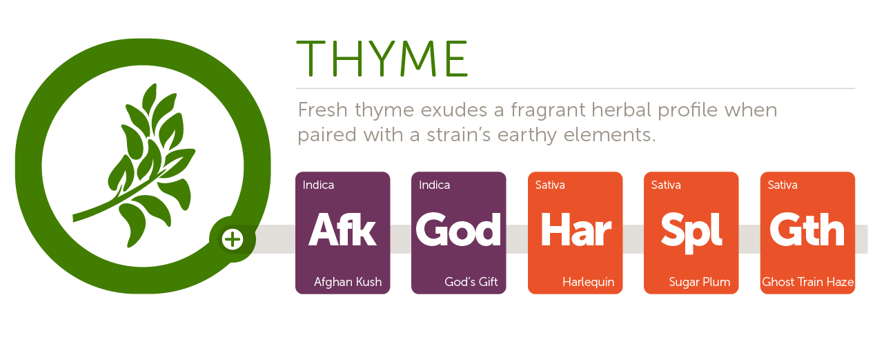 Thyme@2x