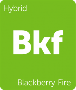 Leafly Blackberry Fire hybrid cannabis strain