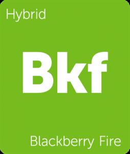 Leafly Blackberry Fire hybrid cannabis strain