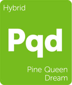 Pqd Pine Queen Dream Leafly cannabis strain tile